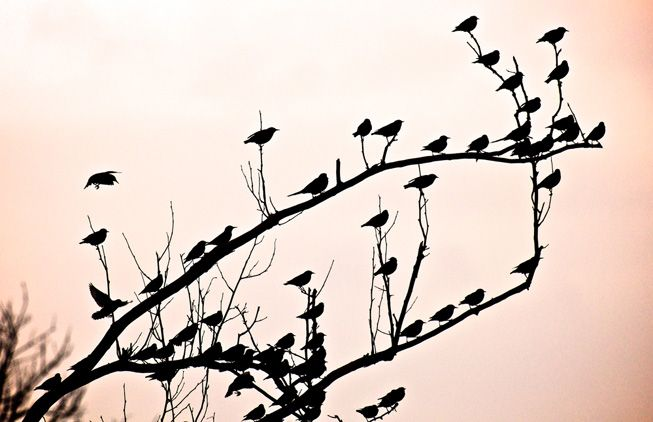 flock of birds singing